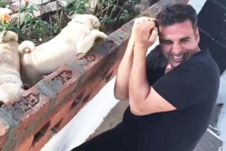 Akshay Kumar Boxing With Pugs Is The CUTEST Thing You'll See On The Net Today video