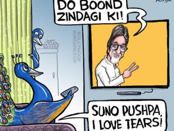 Bollywood Toons Amitabh Bachchan inspires peacocks!