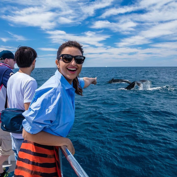 These pictures of Parineeti Chopra with Dolphins will make your day-2